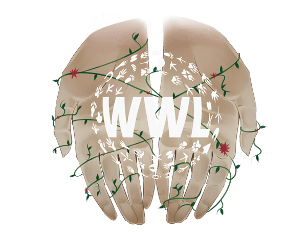 Where is the Wildlife Logo Example