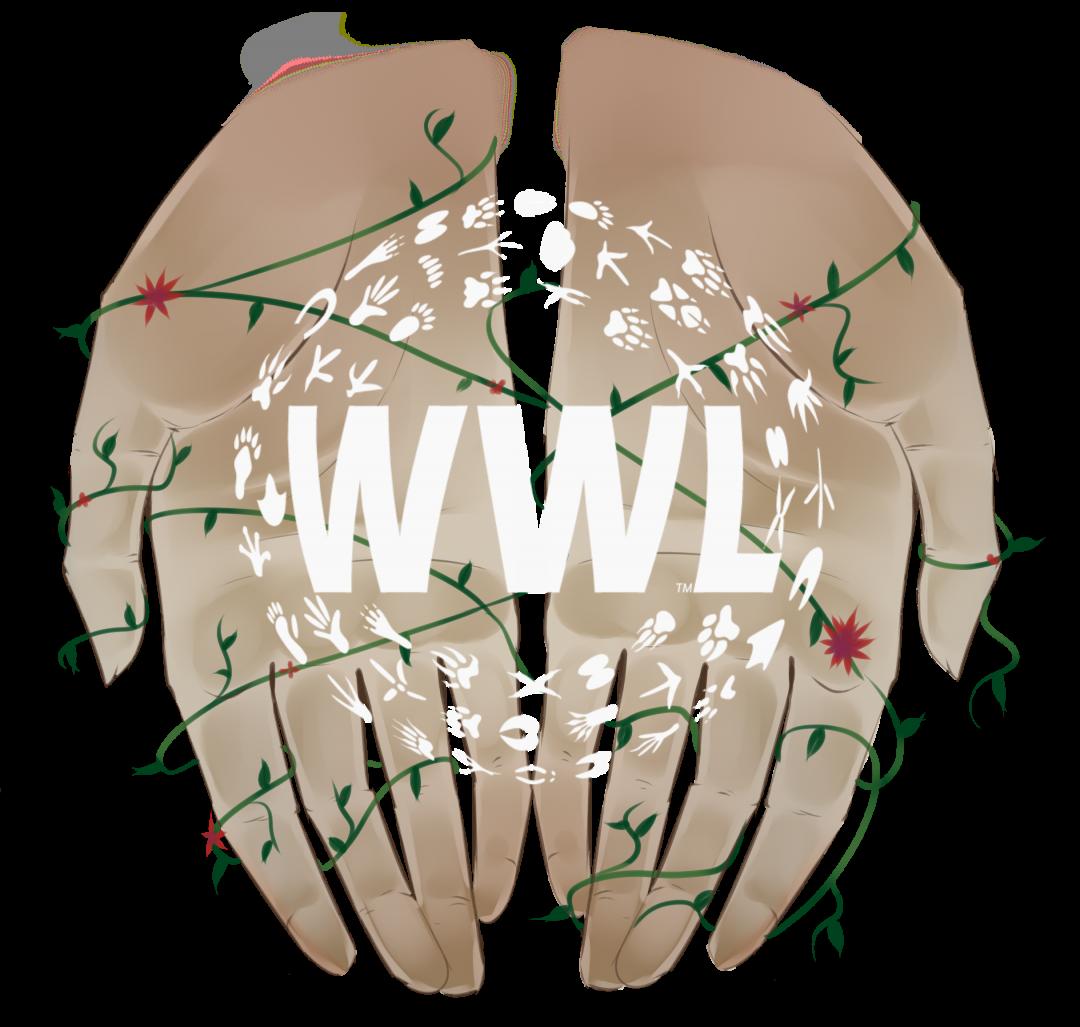 design development develop web website online world wide logo graphic css javascript html wordpress business small art graphic infographic